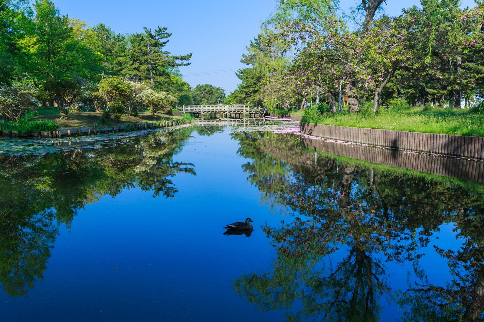 雲形池(日比谷公園)の場所・読み方は?きれいな水の紅葉が楽しみ